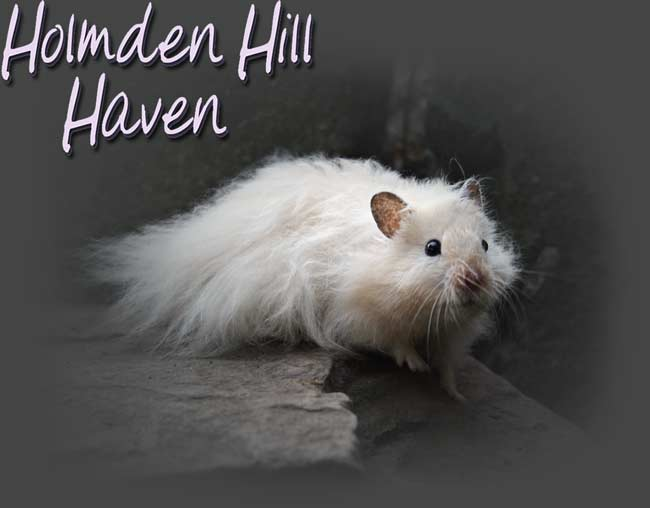 Holmden Hill Haven- Click to Enter